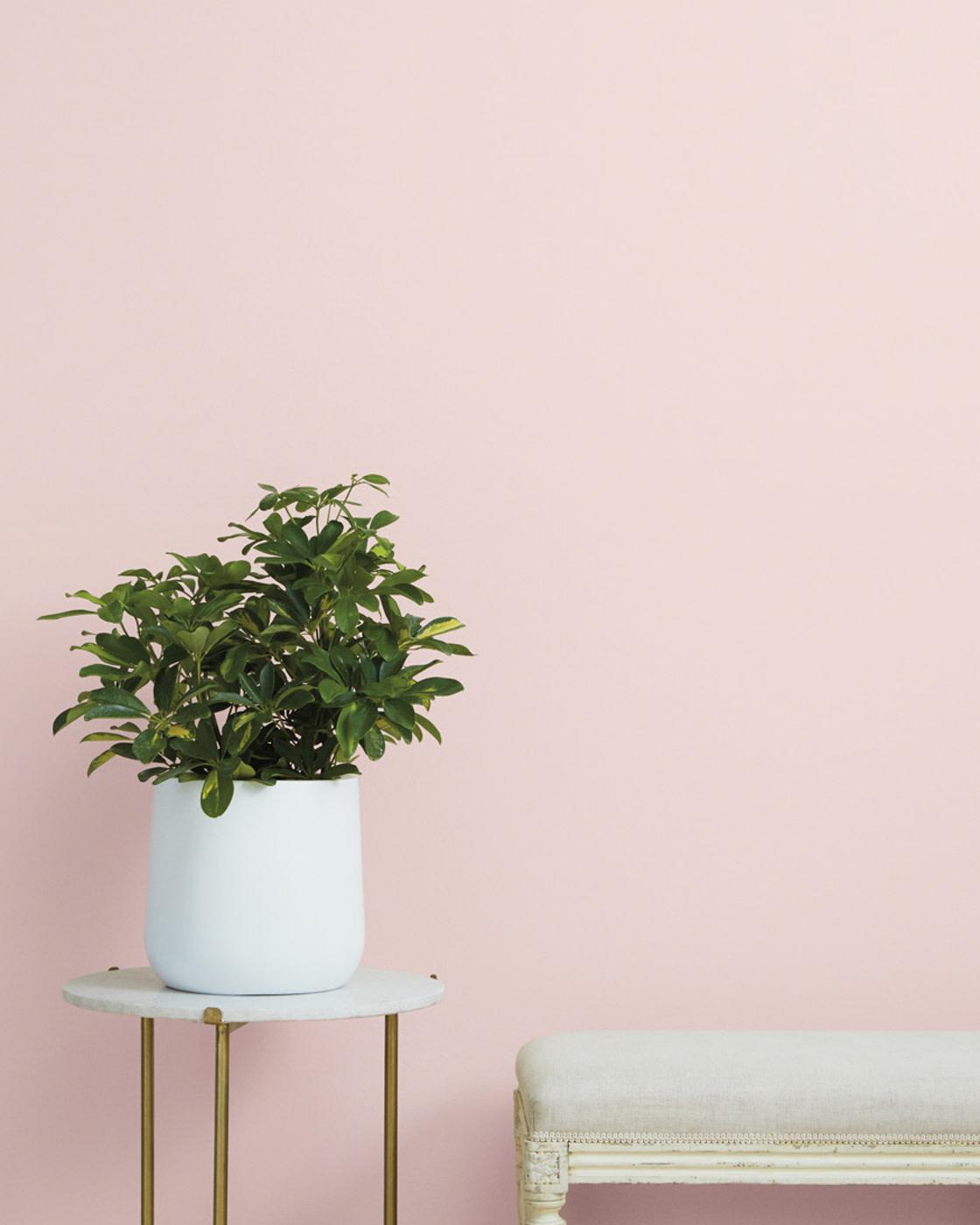 Ambiente de color Rosa